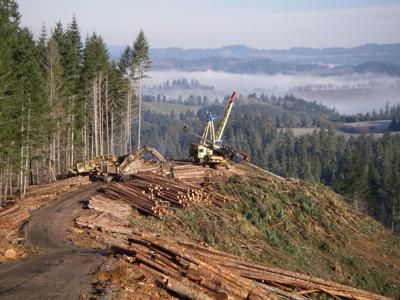 logging equipment on landing.JPG