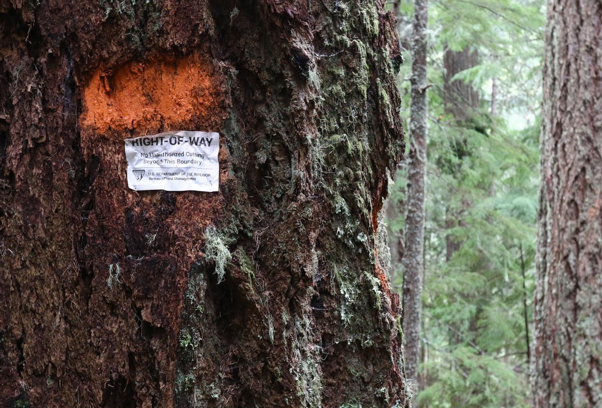 180429-nrr-logging-02