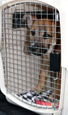More than 100 dogs headed northeast for adoption