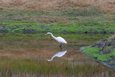 Environmentalists want governor to veto bill that could endanger wetlands