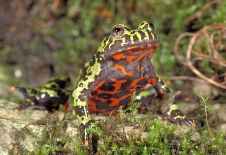 Review: 'Frogs: A Chorus of Colors'
