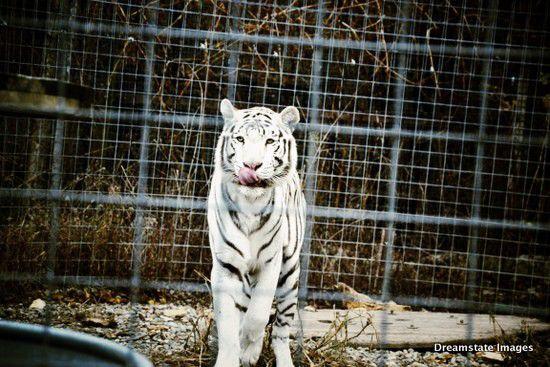 Slideshow: Exotic Feline Rescue Center