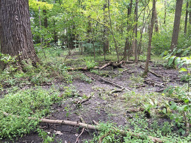 Charitable Trust offers to buy and save Crown Hill Woods