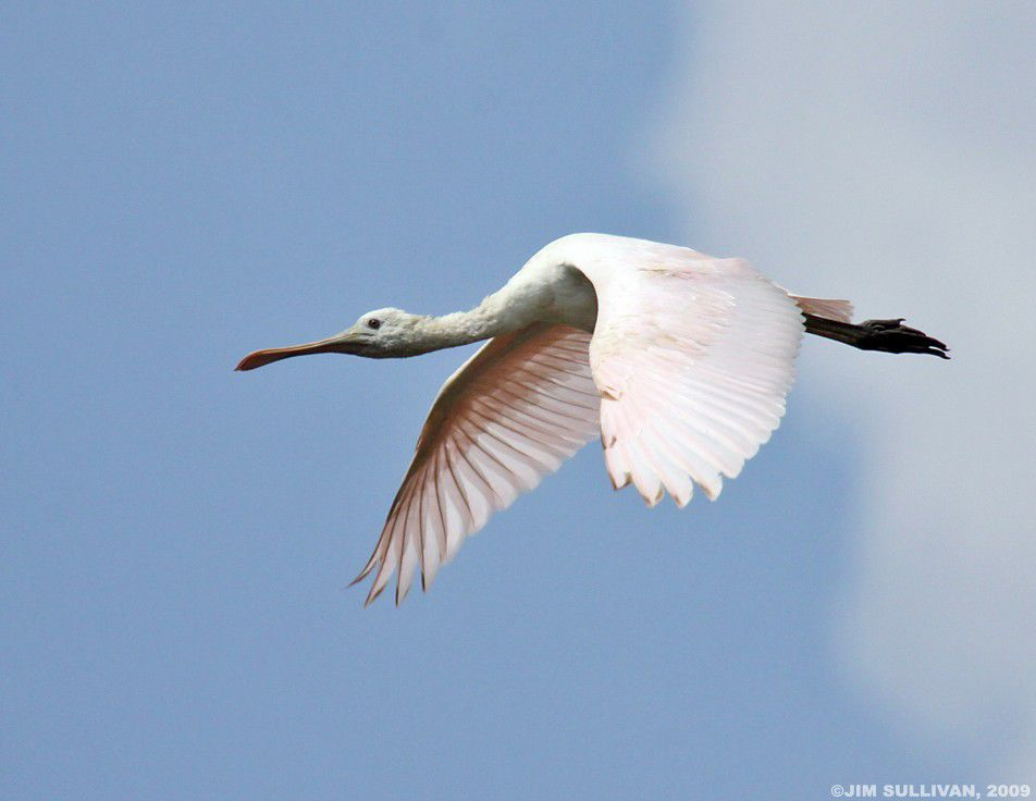 Goose Pond: a wild Indiana treasure