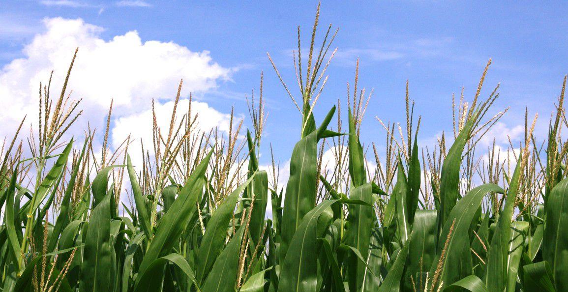 Hoosier ethanol gets second chance