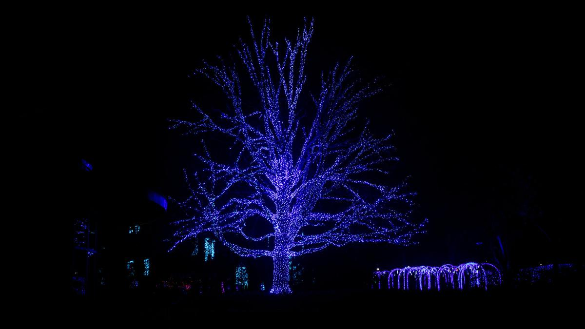 New Fields Winterlights2.jpg