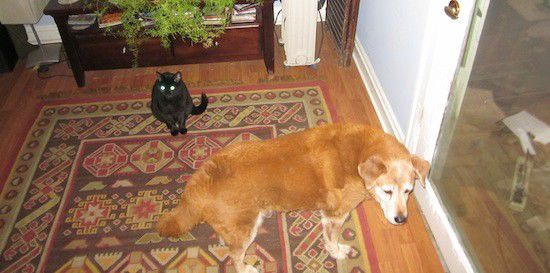 Dog and cat work in tandem