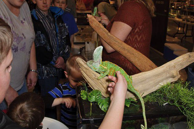 Midwest Reptile show (slideshow)