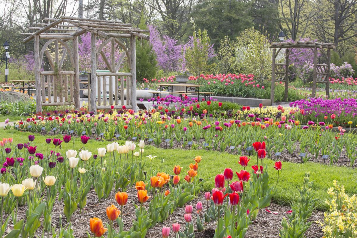 Spring Blooms Celebration of Color April 2017 April Grounds and Gardens