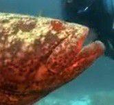 Visit an increasingly rare, thriving coral reef