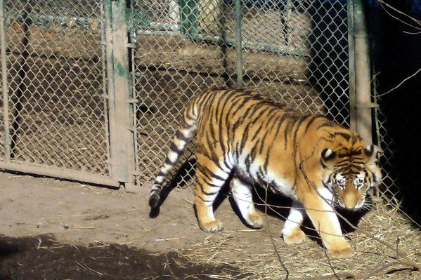 Bill would tighten rules for owning wild animals