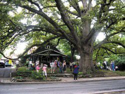 What you missed: 2007 Remarkable Tree Tour