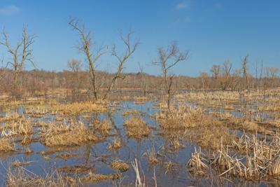 Governor shares concerns about wetland protection repeal after senate approval
