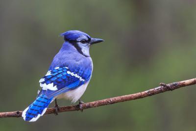 Hoosiers can resume feeding birds