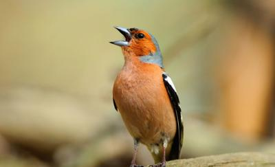 DNR asks Hoosiers to remove bird feeders as bird death reported in more counties