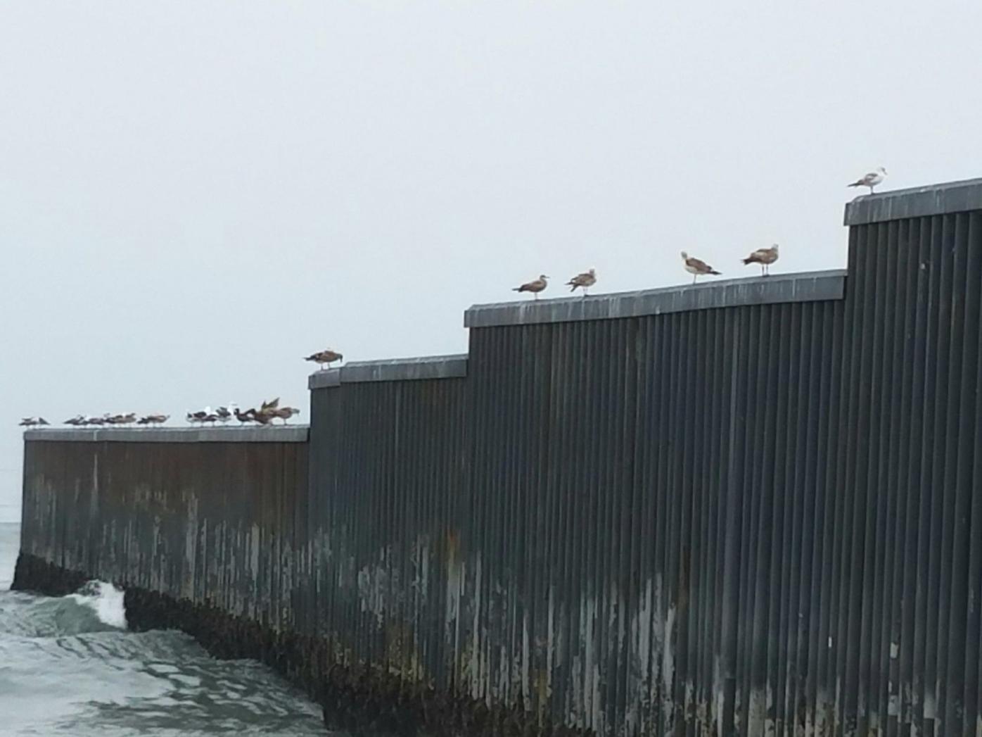 Birds on the border fence