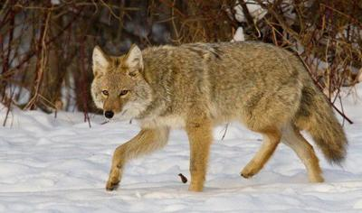 DNR takes no action on off-season penning