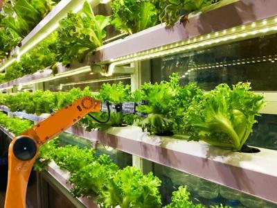 Vertical farms hold promise for local, sustainable produce