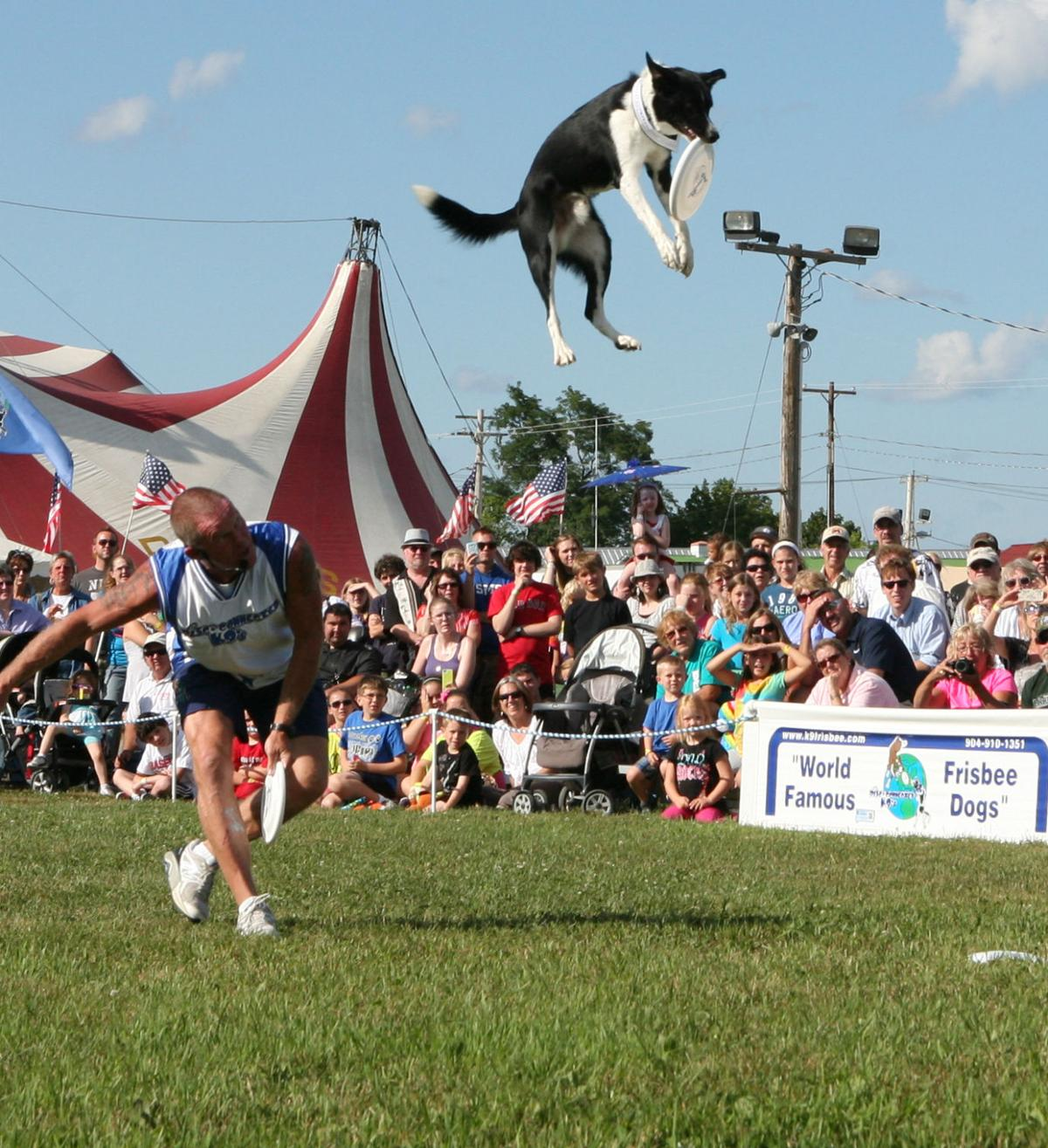 Frisbee dogs to perform at Shenandoah County Fair