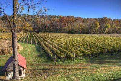 Muse Vineyards