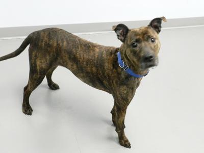 Pet of the Week: Playful Nahla still looking for a home