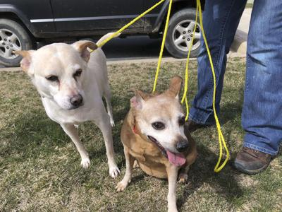 Pet Of The Week Bonded Pups Seek Joint Adoption Nvdailycom