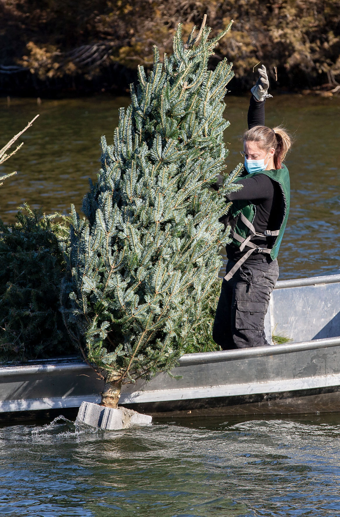 LAKE FREDERICK CHRISTMAS TREES2
