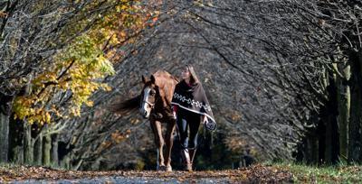 WILD FALL HORSE2