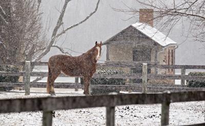 WILD SNOW1