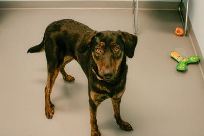 Pet of the Week: Thalia needs an active family