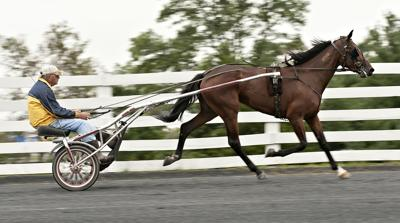 Harness racing returns on Saturday