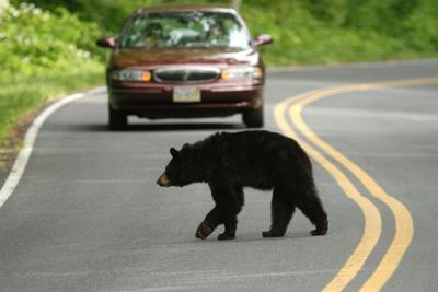 0614_nvd_bears.jpg