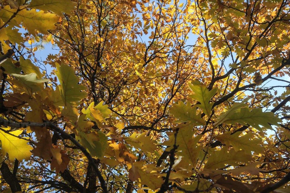 Take 5: Fall Foliage