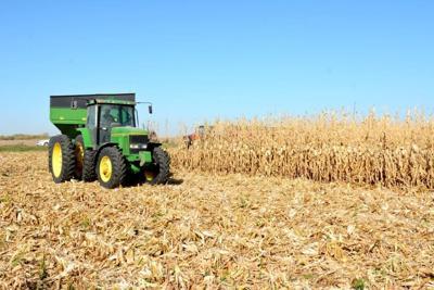 Corn harvest by Boyden