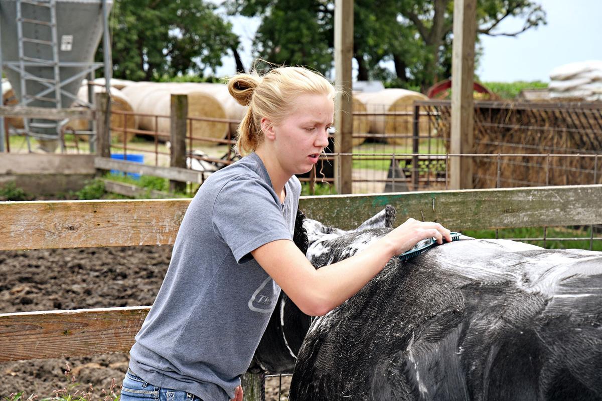 Sami Noteboom preps for steer show