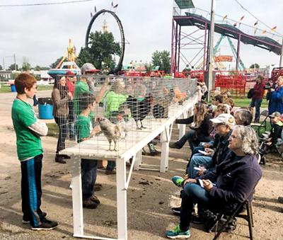 Rooster Crowing Contest Clay County Fair