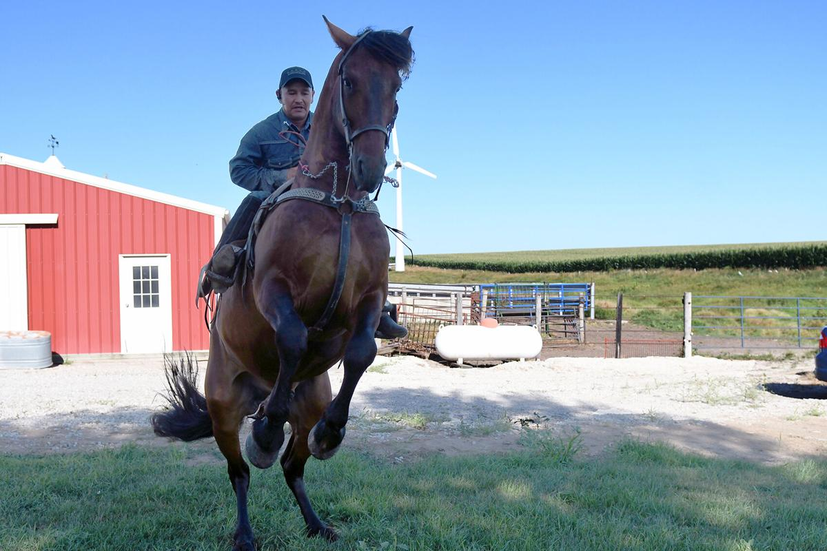 Secret the horse rears up