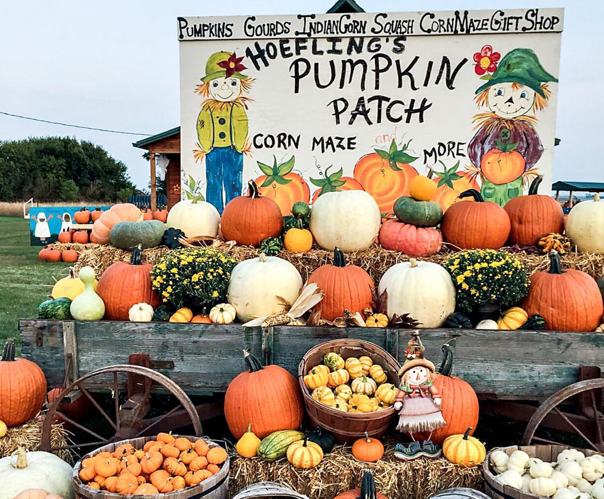 Hoefling Pumpkins