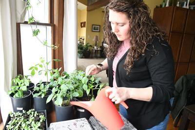 Postma preps her pocket-sized garden