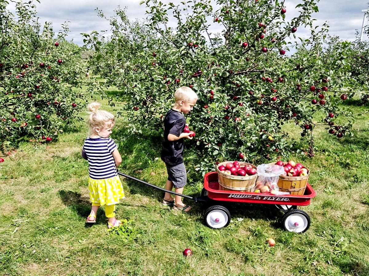 Little Sioux Orchard 1