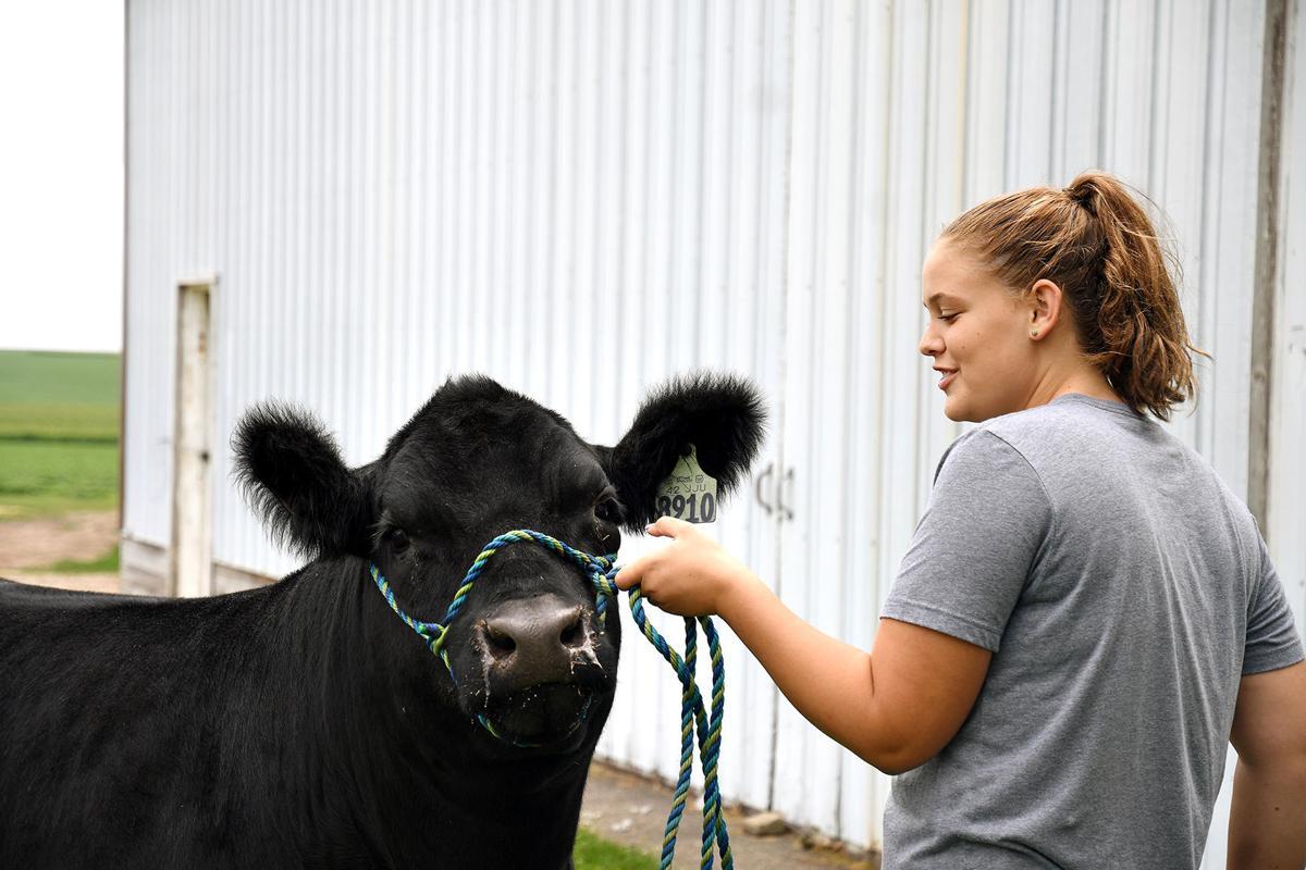 Katie Van Den Top chosen for steer show