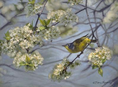 'In the Wild Plum — Nashville Warbler'