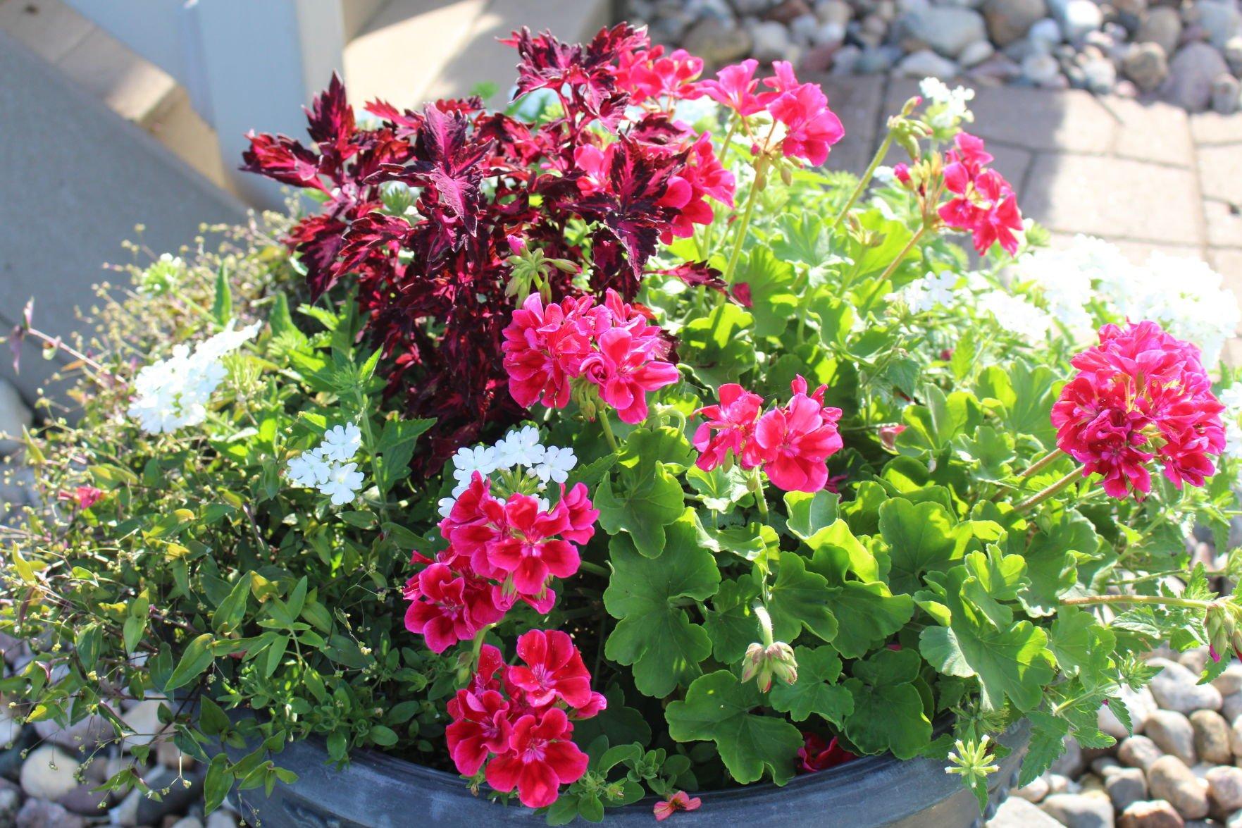Flower gardens were beautiful