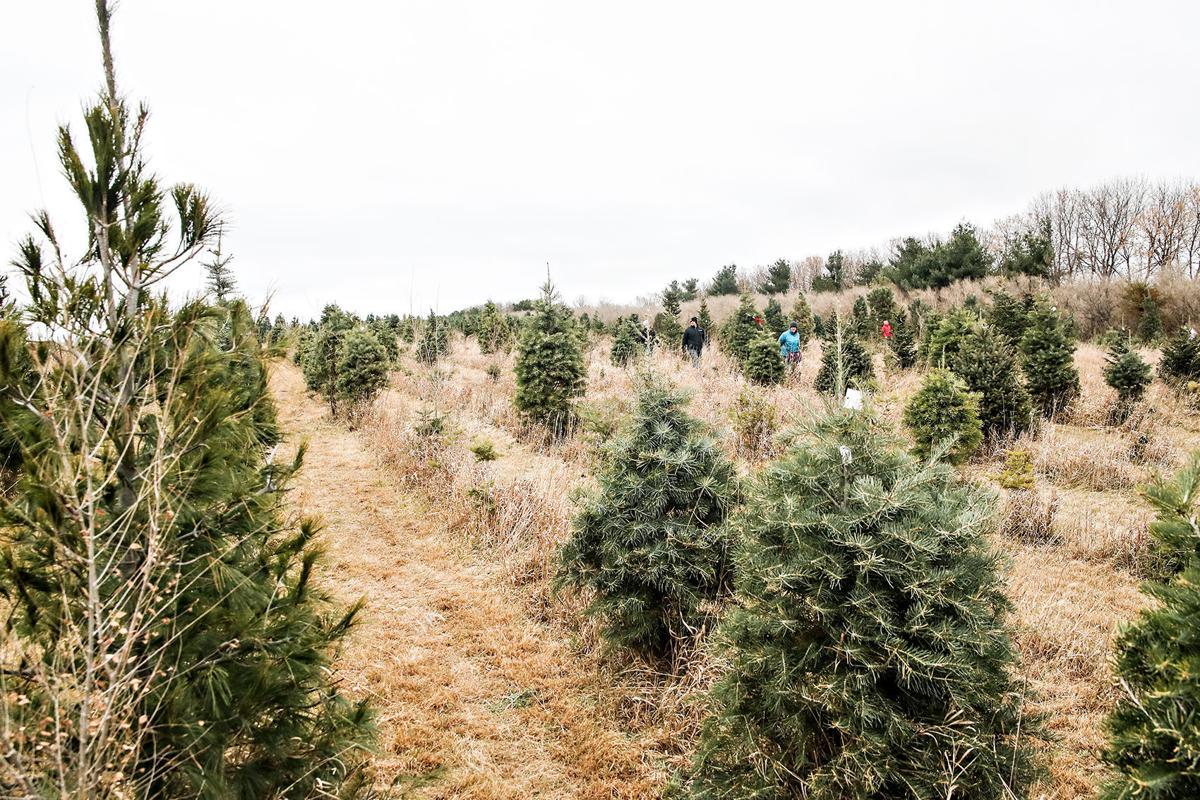 tree farm 2