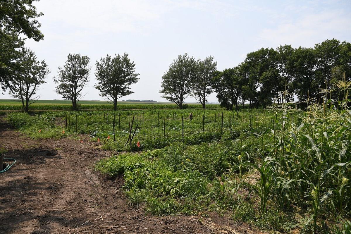 Lester garden grows variety of veggies