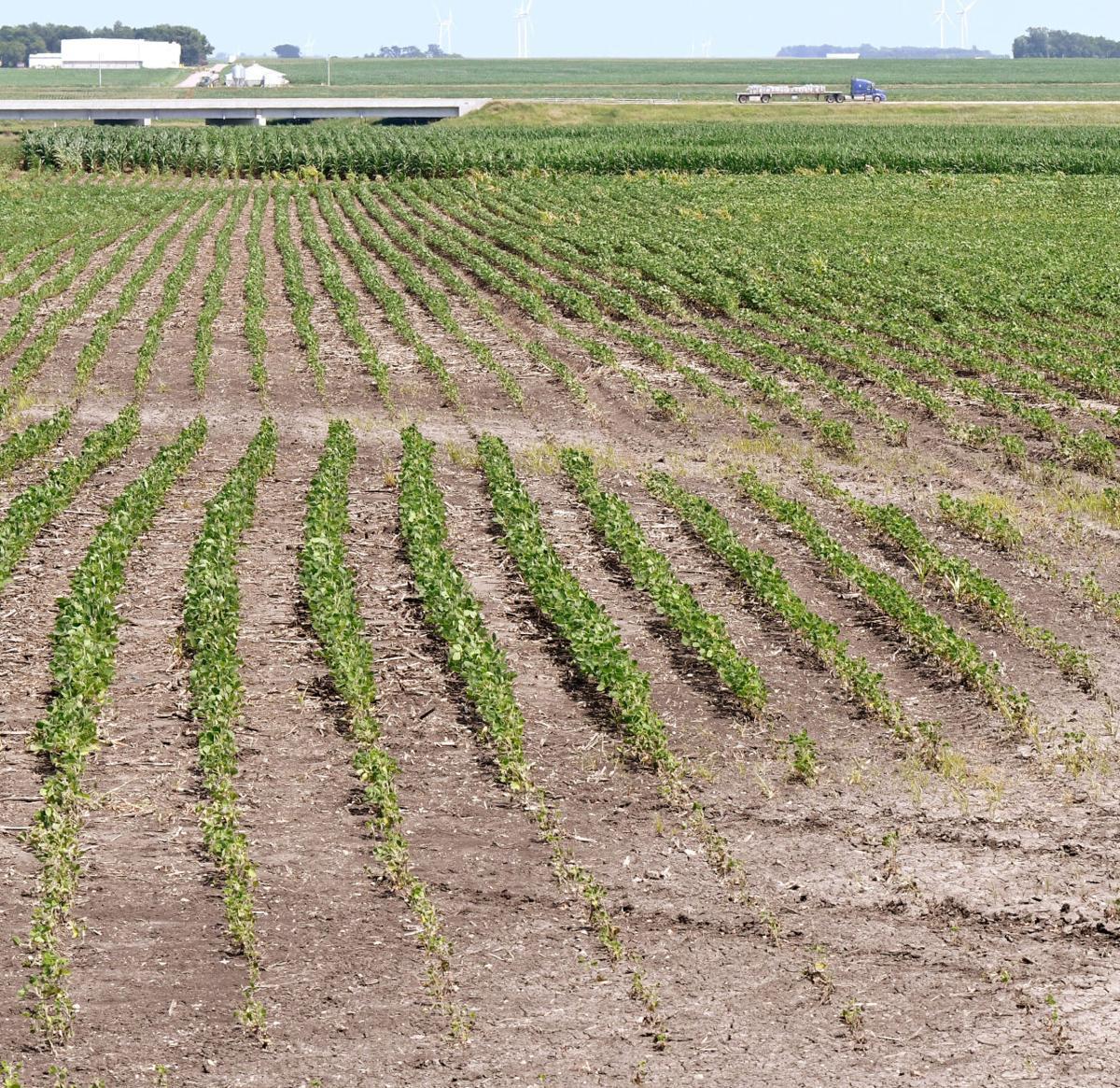 Soybean field north of Sheldon