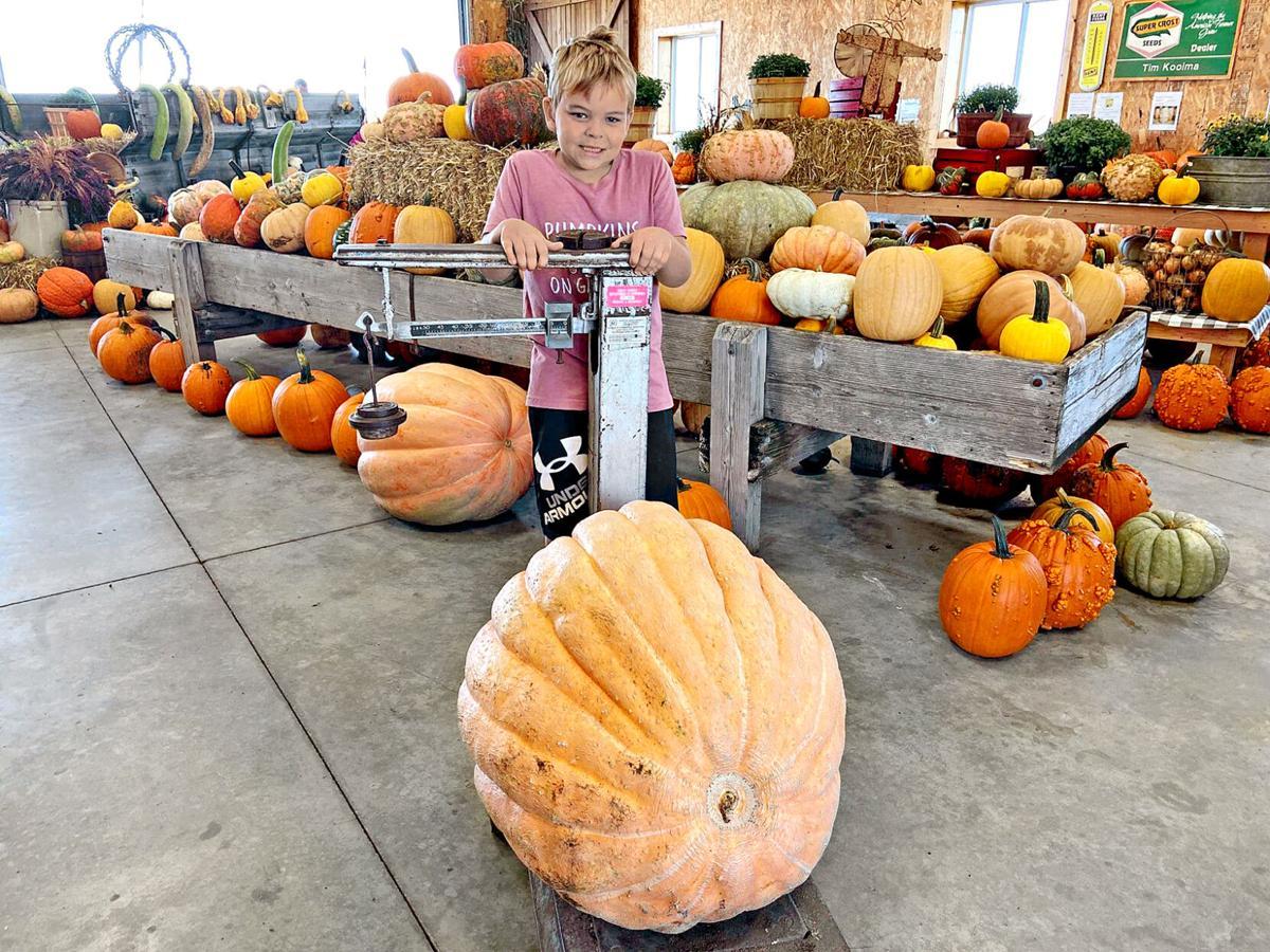 Pumpkins on Garfield