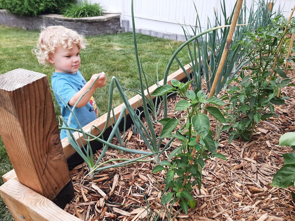 Take 5: Bennett Picks an Onion