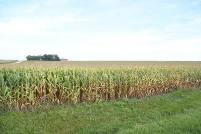 O'Brien County cropland
