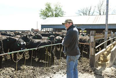 Eric Van Roekel overlooking cattle